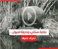 فيديوجراف| حكاية «ستانلي» وحديقة الحيوان
