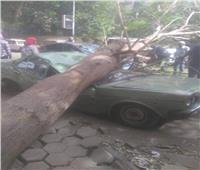 منخفض التنين| سقوط أشجار وتوقف حركة السير بالقناطر الخيرية