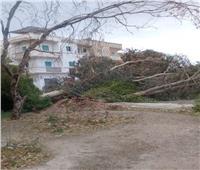 رفع آثار تراكم الرمال والأشجار وأعمدة الإنارة المتساقطة في سفاجا
