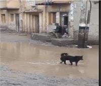فيديو| بعد مصرع كلب صعقًًا.. ابتعدوا عن أعمدة الإنارة