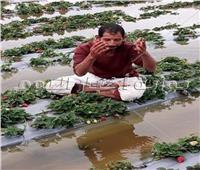 صور| مزارعو الفراولة بالقليوبية: «منخفض التنين أفلسنا وعرضنا للسجن»