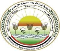 «الزراعة» تعلن أسعار تقاوي محاصيل الموسم الصيفي الجديد