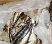 صور| ضبطأسماك وكبد وقوانص غير صالحة للاستخدام الآدمي بفرشوط