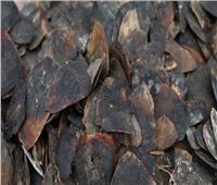 ضبط 6 أطنان من «حراشف آكل النمل».. المتهم الأول في وباء كورونا