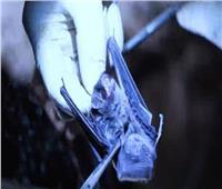 «المدافع الخفي».. فيلم وثائقي يجدد الشك في «تصنيع» فيروس كورونا