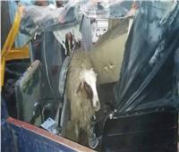 ضبط 3 أطفال بتهمة سرقة «خروف» داخل توك توك بقنا