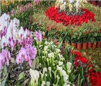 فيديو| مدير حديقة الأورمان يكشف حقيقة انتقال كورونا عبر الزهور والنباتات