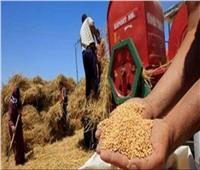 حقيقة توقف الحكومة عن شراء محصول القمح من المزارعين