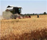 صوامع القمح في أسوان بدأت استلام محصول 2020