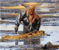 علماء روس يكتشفون بكتيريا «تحلل النفط» في القطب الشمالي