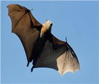 أحد سكان شبين القناطر يكشف كواليس ظهور الخفافيش ودور الشطة في القضاء عليها