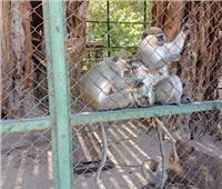 شاهد| تجول في حديقة الحيوان في «شم النسيم» لأول مرة من منزلك