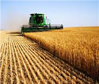 فيديو  الزراعة: 200 ألف فدان من القمح زيادة عن العام السابق