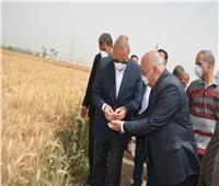 «الهجان»: 51.6 ألف فدان إجمالي المساحة المزروعة بالقمح في القليوبية