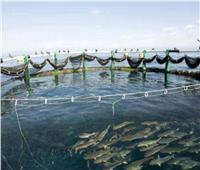 تنمية سيناء| أحواض الاستزراع السمكي بشرق بورسعيد الأضخم في تاريخ مصر