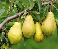 تعرف على روشتة الزراعة لمزارعي التفاح والكمثرى خلال مايو