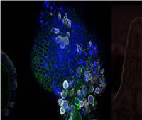 شاهد أول صور تفصيلية تظهر شكل فيروس كورونا