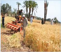 فيديو  التموين: طبقنا كافة الإجراءات الوقائية من كورونا خلال توريد القمح