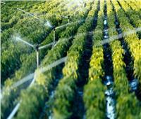فيديو  الزراعة: إقبال من دول العالم على استيراد المنتجات المصرية