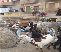 طوخ تغرق في القمامة.. ومواطنون لوزير التنمية المحلية: أنقذنا من كارثة