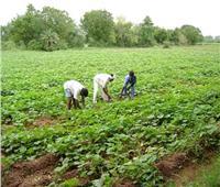كيف تحمي المحاصيل الزراعية من تأثير ارتفاع الموجة الحارة؟