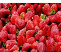 مصر الأولى عالميا في تصدير الفراولة المجمدة وفقا لمركز التجارة العالمية