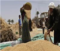 ارتفاع مخزون القمح بصوامع الإسكندرية لـ 107 ألف طن