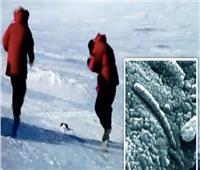 يشبه «الدودة».. اكتشاف مخلوق غريب داخل صخرة قادمة من الفضاء