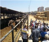 «قطاع إنتاج الزراعة» يواصل جولاته الميدانية لمزارع كفر الشيخ
