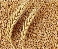«الفلاحين»: الصوامع أوشكت على الانتهاء من استلام القمح لهذا الموسم