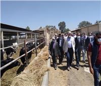 صور.. القصير يشهد حصاد القمح ويتفقد مزرعة بحوث الإنتاج الحيواني بكفر الشيخ