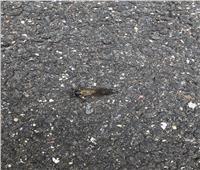 العلماء يحذرون من خروج ملايين الحشرات كانت مختبئة 17 عامًا تحت الأرض