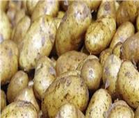 حقيقة وجود أزمة في محصول البطاطس بالأسواق