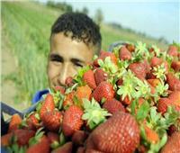 فيديو| متحدث الزراعة يكشف سبب طفرة الحاصلات الزراعية