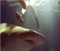 مقتل ثالث أسترالي بهجوم لسمكة قرش هذا العام