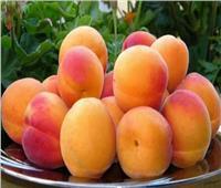 «الزراعة» تصدر روشتة نصائح للتعامل مع أشجار المشمش والخوخ خلال يونيو الجاري