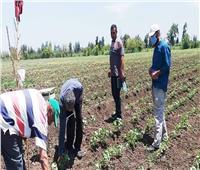 وكيل زراعة البحيرة: لجان لمتابعة زراعات القطن والمحاصيل الصيفية