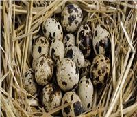 فيديو| فوائد مذهلة لن تتوقعها في تناول بيض السمان