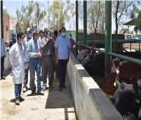 رئيس جامعة سوهاج يتابع العمل بمزارع الإنتاج الحيواني والدواجن