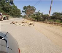 استياء بين أهالي قرية بالغربية بسبب إعاقة «بيارات الصرف الصحي» للطريق