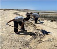 """""""هيبكا"""" بالتعاون مع """"شجرة"""" يسيطران على تلوث زيتى بشواطئ مرسى علم"""