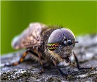 «الحشرات تحتضر».. كيف سيكون شكل الكوكب في 2030؟