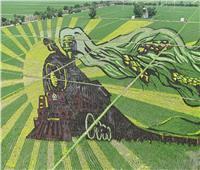 لوحات فنية عملاقة في حقول الأرز بالصين.. صور