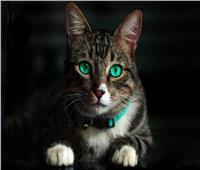 دعوى قضائية بالأردن.. والسبب قطة