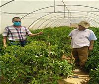 صور| «الزراعة» تطمئن على الدور الإرشادي لمحطة بحوث الصحراء في مريوط
