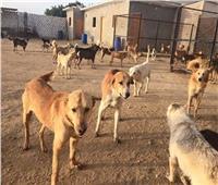 الأردن يخصص مبلغاً مالياً لكل من يمسك بـ«كلب ضال»
