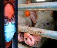 الصين: سلالة «جي4» من إنفلونزا الخنازير ليست جديدة.. ولا تصيب البشر بسهولة