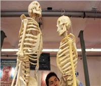«دراسة حديثة» تستخدم عظام الإنسان في محاربة الشيخوخة