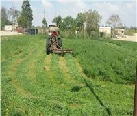 «الزراعة» تصدر توصيات لمزارعين محاصيل الأعلاف الخضراء الشتوية و الصيفية