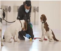 الإمارات تبتكر طريقة جديدة للكشف عن كورونا بـ«الكلاب البوليسية»